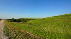 Kansas Flint Hills cows 2 Stock Footage