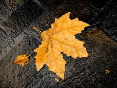 Stock Photo of fall bright wet leaf