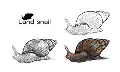 Crawling land snails - stock illustration