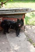 Black dog staying near doghouse - stock photo