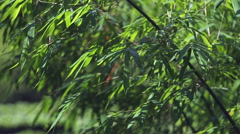 Bamboo leaves movement background Stock Footage