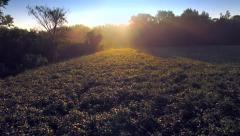Magic Morning Over Misty Soybean Field, Rural Agriculture Stock Footage