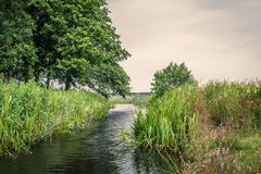 Small lake stream with rushes - stock photo