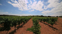 Languedoc vineyards - south of France - PAN1 Stock Footage