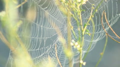 Spider web shaking on the Wind Stock Footage