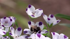 Bee in work Stock Footage