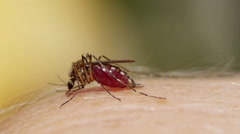Mosquito blood sucking on human skin Stock Footage