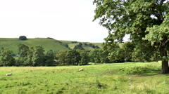 Zoom in from sheep field to Peveril Castle, Peak District. Stock Footage