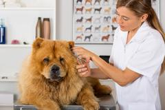 Canine hairdresser - stock photo