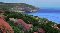 Colorful Bushes along Cave Coastline Porto Conte Sardinia Italy - 25FPS PAL Stock Footage