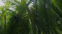 Tropical Rain Forest with Green Leaves of Palms in Jungle Stock Footage