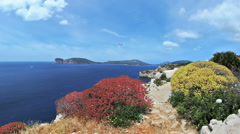 Colorful Bushes Windy Capo Caccia Bay Sardinia Italy - 25FPS PAL Stock Footage