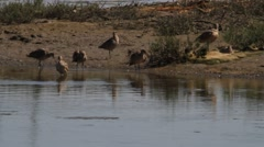 Birds on lake Stock Footage