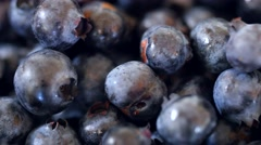 Fresh picked basket of wild blueberries dolly shot Stock Footage