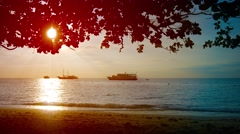 Late Afternoon Sun throught the Trees on a Tropical Beach Stock Footage