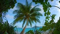 Tropical Beach from Behind Native Flora Stock Footage