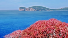 Red Bush Blue Sea  Capo Caccia Sardinia Italy - 25FPS PAL Stock Footage