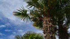 Palm Trees - 23 - Trunks and Leaves - Sunny and Windy Stock Footage