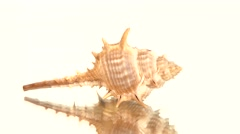 Prickly sea shell on white, rotation, reflection, cam moves to the left Stock Footage