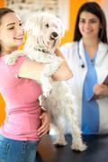 Happy girl and Maltese dog in vet clinic - stock photo