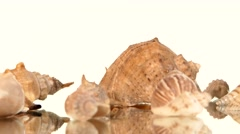 A lot of sea shells on white, rotation, reflection Stock Footage