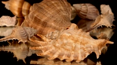 A lot of sea shells on black, rotation, reflection Stock Footage