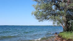 Blue Water Rock Beach Willow Tree Stock Footage