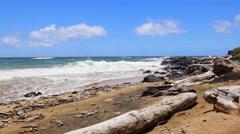 Driftwood on beach in Molokai Hawaii Stock Footage