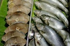 Seafood, fish and fillet sell in supermarket Stock Photos