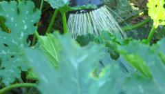 Vegetable garden 21 - Watering can watering garden through the leaves - Close-up Stock Footage