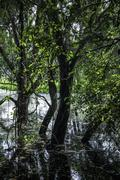 Tree with flooding in swamp - stock photo