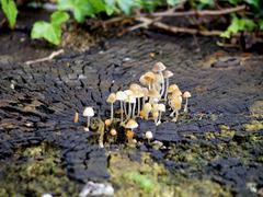 mushroom on log - stock photo