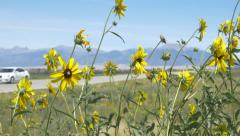 Wild flowers with mountains in background with car driving by - stock footage