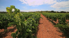 Languedoc vineyards - south of France 2 Stock Footage