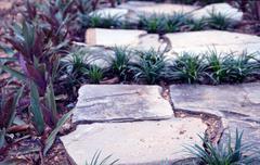 Garden stone paving plant decoration Stock Photos
