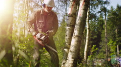 Lumberjack is Felling Tree with Chainsaw - stock footage