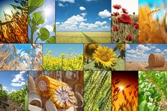 Stock Photo of Agricultural collage