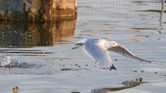 The gull's take off from the water - stock photo