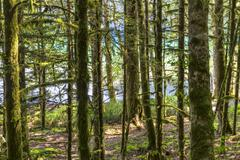 Stock Photo of Lake Crescent Forest Path