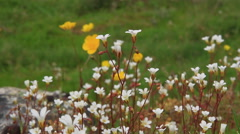 White and yellow wildflowers Stock Footage
