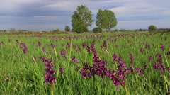 Landscape with Meadows and Orchids Stock Footage