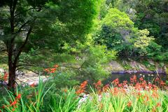 Beautiful water view with orange crocosmia flowers in New Zealand. Mission St - stock photo