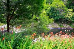 Beautiful water view with orange crocosmia flowers in New Zealand. Mission St Stock Photos