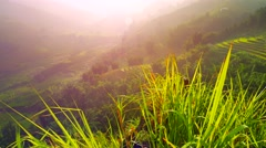 View of valley with green rice terraces behind long grass. Sapa, Vietnam Stock Footage