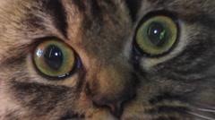 eye of naughty Persian cat - stock footage