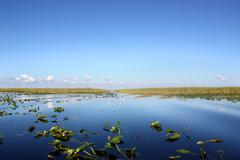 Everglades - stock photo
