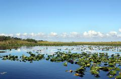 Everglades Wetland - stock photo
