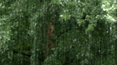 Rain on a green background of foliage Stock Footage
