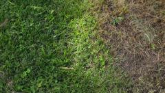 Poisoned grass dead Stock Footage