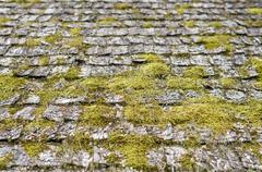 Closeup on old and weathered wooden roof shingle covered by moss Stock Photos